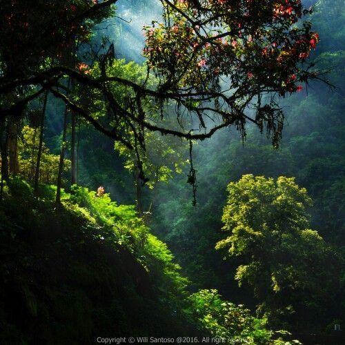 Lust Green and Morning Ray - Taken at Maribaya, Lembang, Bandung