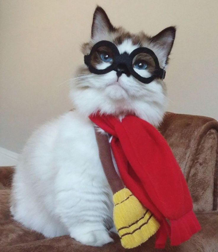 Funny Cat Dressed Like Harry Potter Awesome Kitty Cats