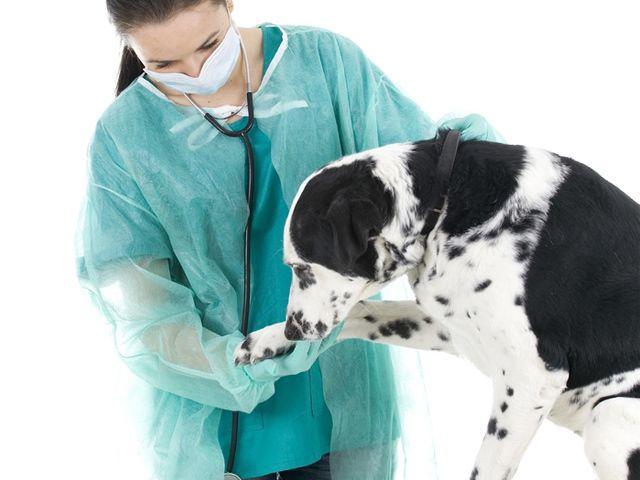 Kisállat-biztosítás az Aegon Biztosítótól - TB rendszer a kisállatok részére? Igen, ma már ez is elérhető!  #kutya #dog  #hírek   #kisállatbiztosítás #petinsurance  #egészség   #kutyabaráthelyek