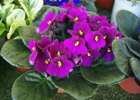 plantas para la energía astral