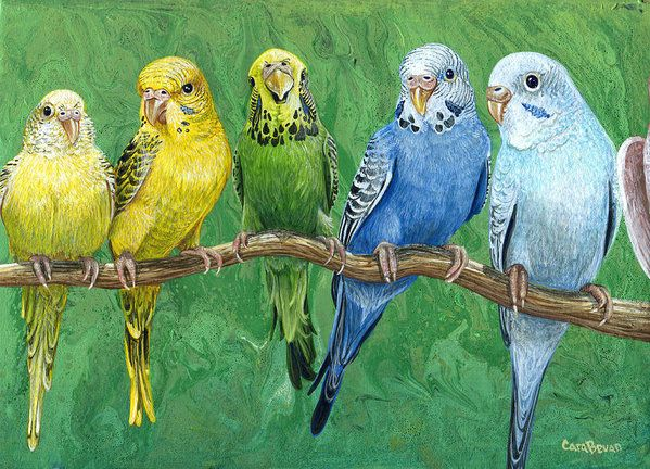 Budgie Print featuring the painting Budgie Band by Cara Bevan