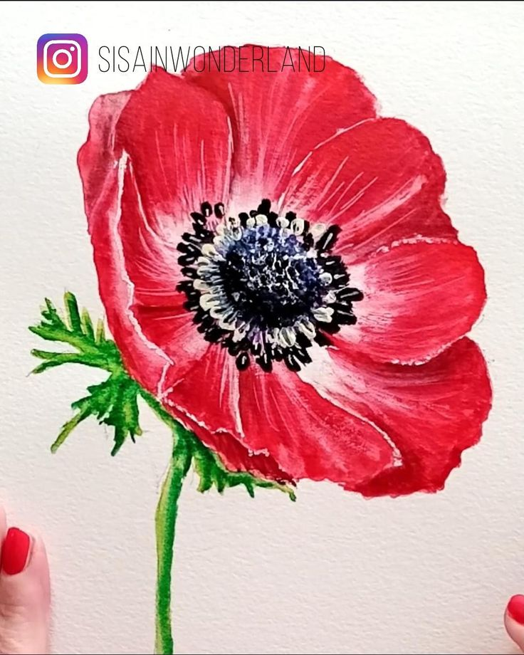 How to paint the RED ANEMONE with watercolor, quick