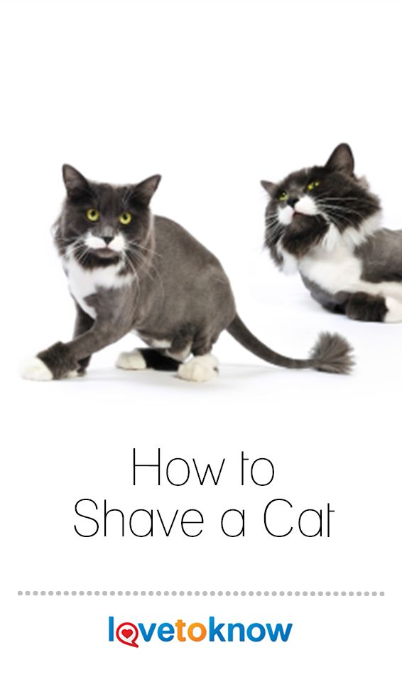 How To Shave A Cat Lovetoknow Shaved Cat Cats Pets Dogs Breeds