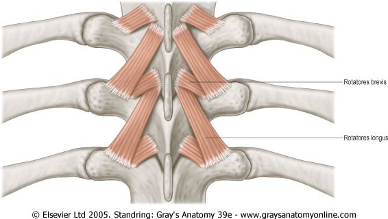 16 best MedPics images on Pinterest | Human body, Physical therapy ...
