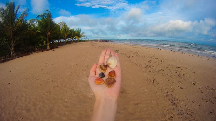 Shells - Maragogi/AL - Brazil