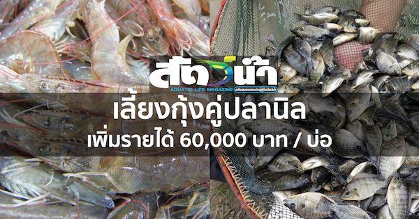 เล ยงก งค ปลาน ล เพ มรายได 60 000 บาท บ อ