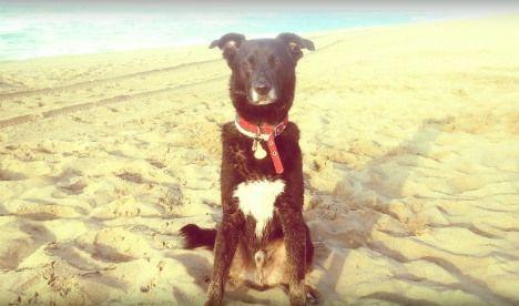 Woof! The top ten dog-friendly beaches in Spain // #DogFriendlySpain