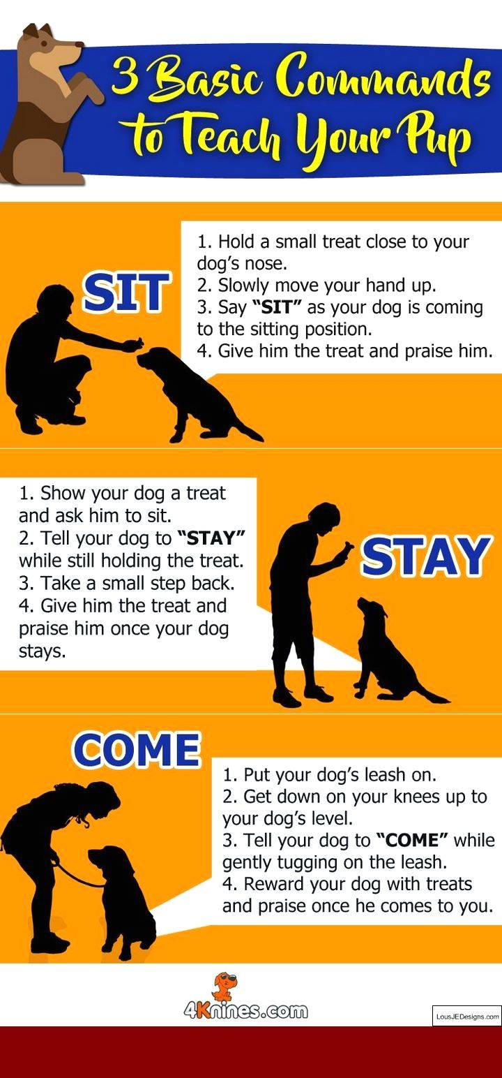 How To Train A 1 Year Old Dog To Pee Outside And Pics Of Teaching A Dog Not To Jump Fence Tip 8981583 Puppy Training Dog Training Obedience Dog Training