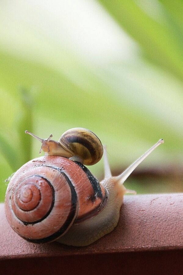 madness-and-gods: Snails ^__^