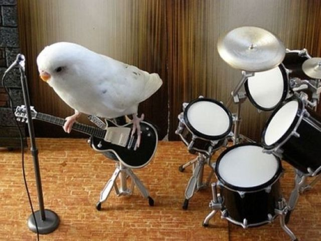 Best Parakeet Rock Band Ever