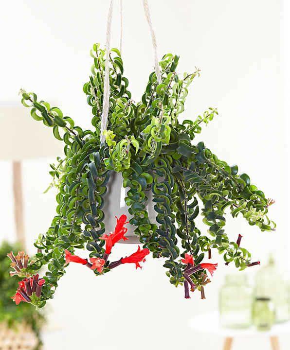 10 Plantes Retombantes D Interieur Indispensables A La Maison