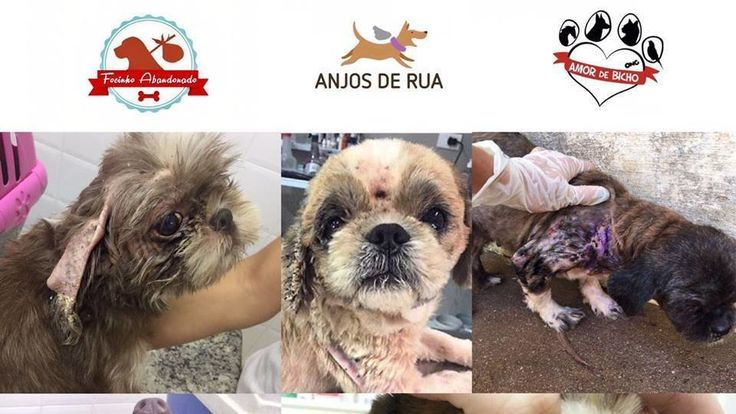 "After much suffering, in early November / 2016, about 120 dogs were rescued from the cruelty and indifference of humans, where they were used as ""baby-making factories"" and had no BASIC care in a clandestine kennel of Sto Antonio de Posse (City near Campinas SP). The rescue was done at the request of the Public Prosecutor of Jaguariúna, in the interior of São Paulo, which obtained an injunction to search and seize the animals, which are already in the custody of the Associations and being…"