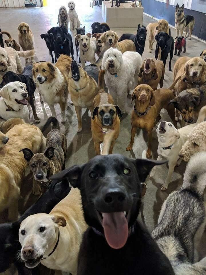 The Best Selfie In The World Dog Selfie Cute Animals Dog Daycare