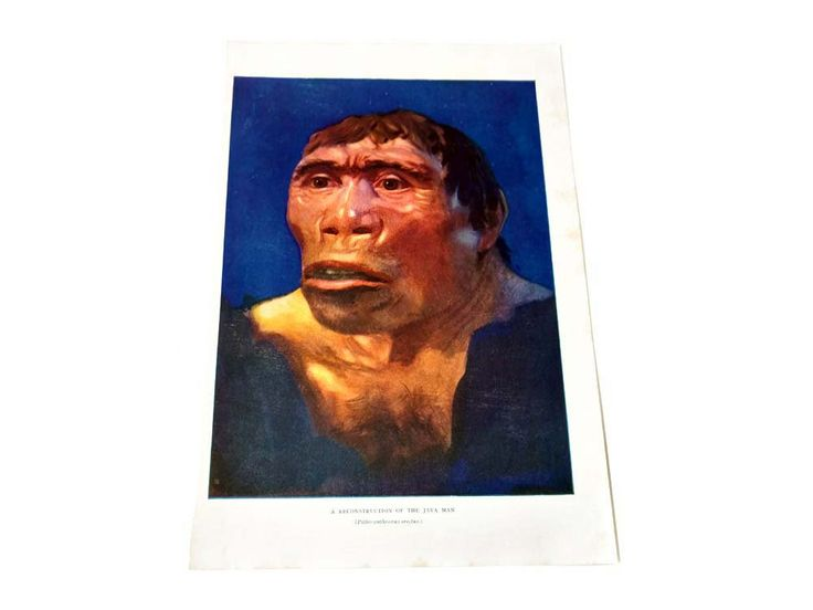 Caveman Picture A Reconstruction of the Java Man Color Illustration Archaeology Darwin Theory Ape Like Man The Outline of Science 1922 by CollectionSelection on Etsy