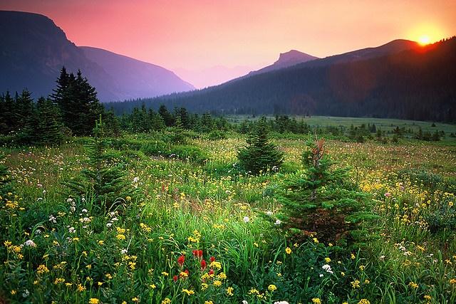 Sunrise over Alpine meadow near 'Snowbowl Campground' on the 'Skyline Trail', Jasper, AB, Canada - August 2003