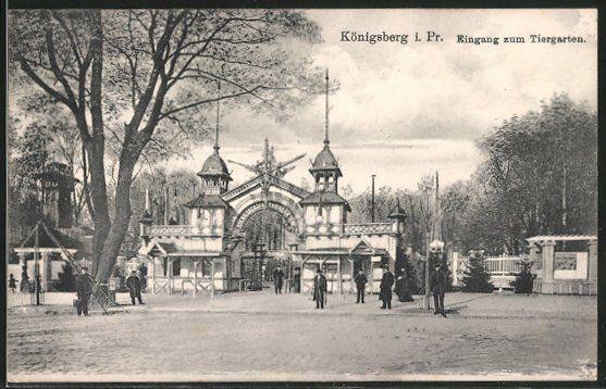 alte AK Königsberg, Eingang zum Tiergarten