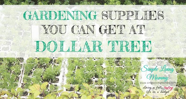 Gardening Supplies You Can Get at Dollar Tree - Simple Living Mommy