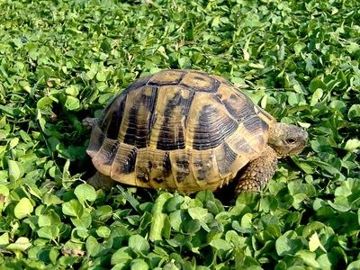How to Care for Box Turtles thumbnail