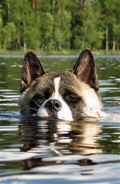 Love it. My Akitas hate water tho