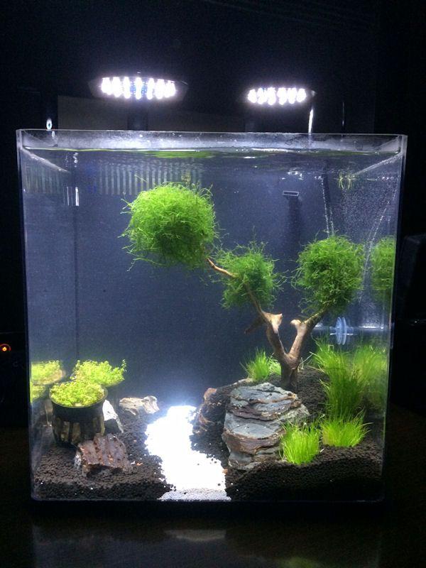 5 Gallon Aquarium Aquascape - CLIKSLUIZA