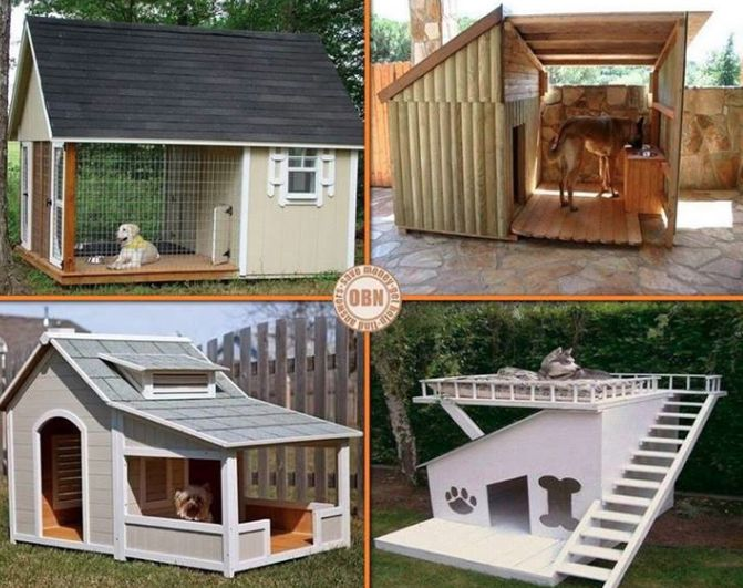 1000 Images About Dog Landscaping On Pinterest For Dogs