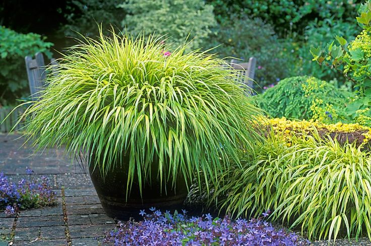 10 best images about grasses on pinterest pictures of for Top ten ornamental grasses