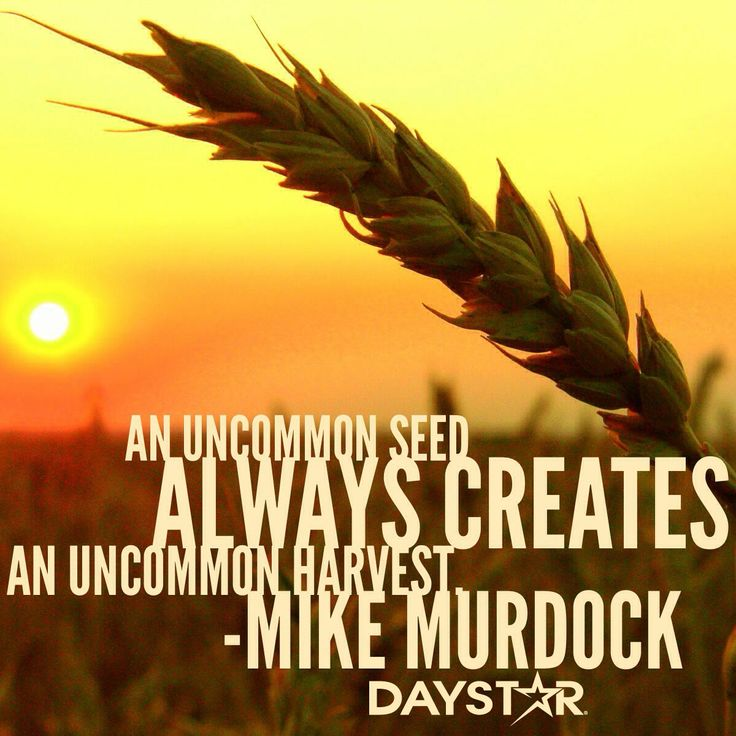 Mike Murdock Quotes: An Uncommon Seed Always Creates An Uncommon Harvest. -Mike