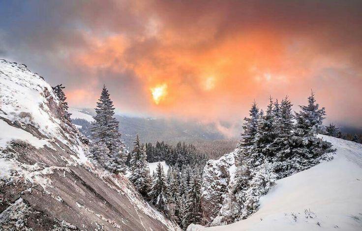 Bucovina  , Romania