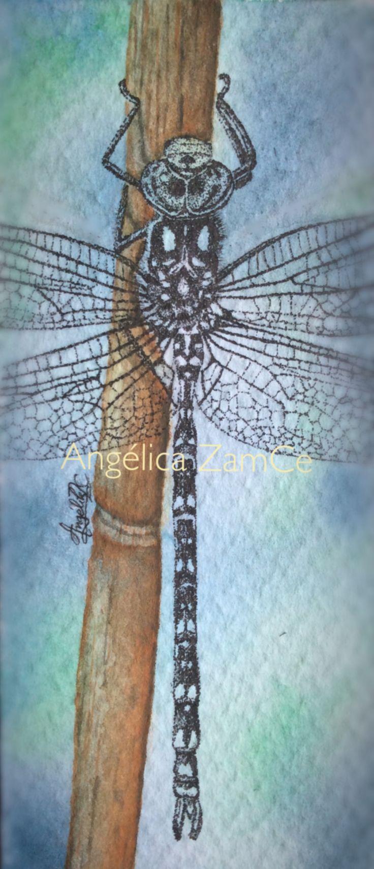 Libélula en rapidógrafo. Dragonfly. Ilustración en acuarela y rapidógrafo. Watercolor and rapidograph illustration.