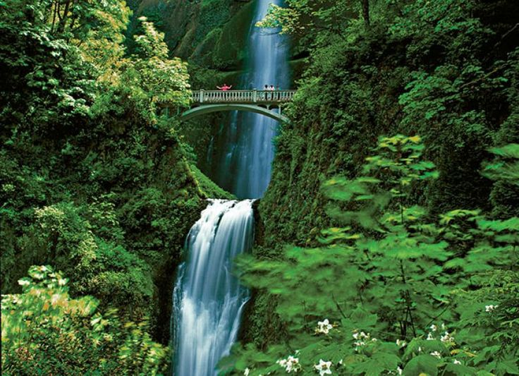 Multnomah Falls, the tallest waterfall in Oregon, plunges 542 feet.