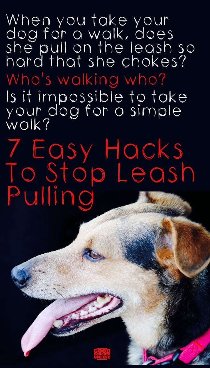 How To Stop Dog From Pulling On Leash Dog Training Come Dog
