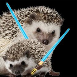 The Guild of Jedi Hedgies <<<< WHAT ARE YOU DOING JAWN!!!!! (I'm not even in that fandom yet but I couldn't help myself!)