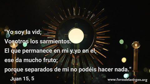 """#BIBLIA """"Yo soy la vid; Vosotros los sarmientos. El que permanece en mi y yo en el, Ese da mucho fruto; Porque separados de mi no podéis hacer nada."""" Juan 15, 5."""
