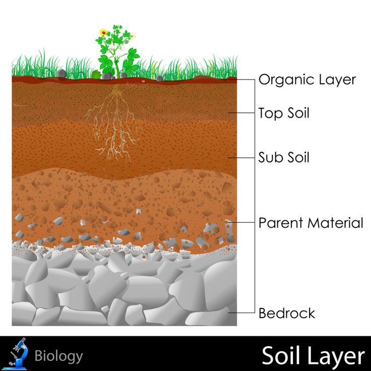 Soil profile diagram for children for Soil information for kids