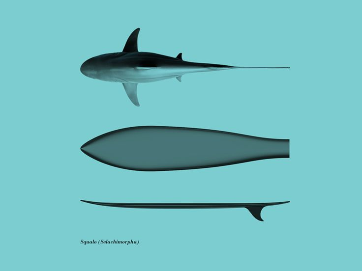'surfph o morph' surfboards by giulio iacchetti & francesco a. fiorentio of surfer's den