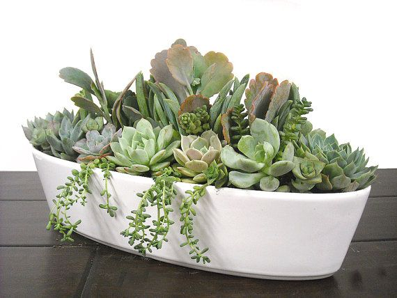 180 Best Images About Succulent Window Boxes Containers On Pinterest Gardens Window Boxes