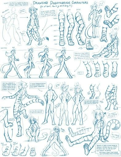 How to draw a digitigrade character