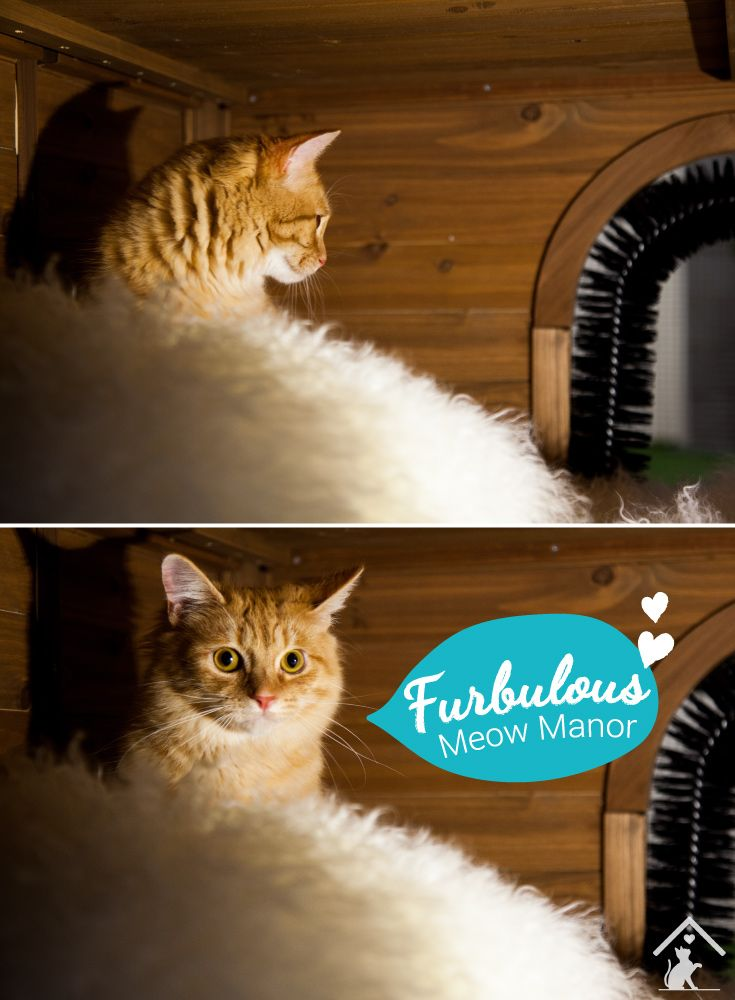 Treat your cats to a fur-bulous Meow Manor enclosure today! Click on the image to find out more. #meowmanor #outdoorcatenclosure #backyardcatenclosures