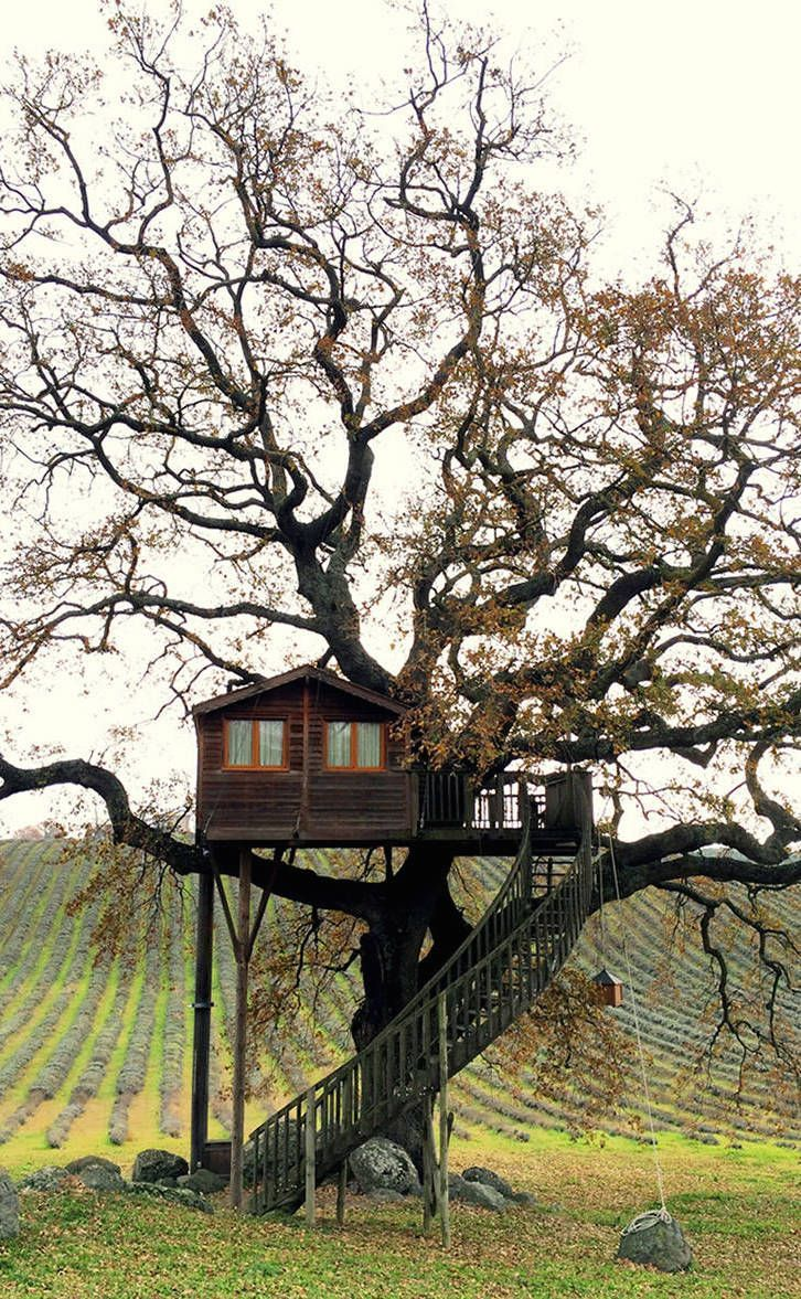 You can see the tree which this tree house castle clings to through - Wooden Tree House In Tuscany
