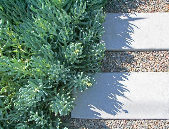 Blue and Gray Foliage: Contemporary Landscape, Blue Chalk, Landscape Architecture, Landscape Design, Gardens Paths, Step Stones, Chalk Sticks, Shades Of Green, Green Landscape