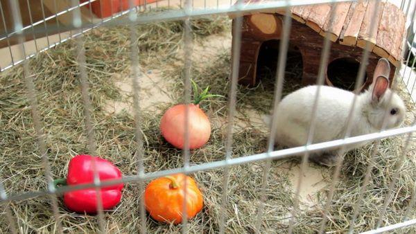 Выбор клетки и домика для декоративного кролика  Итак, вы подготовили комнату для содержания кролика, теперь стоит побеспокоиться об их личном пространстве и домике. Лучше всего для этого подойдет специальная покупная клетка. Они бывают разных размеров и форм, поэтому отталкиваться нужно от породы животного и его потребностей. Если клетку вы хотите купить на длительный срок, то нужно взять большую, так сказать «на вырост», но в любом случае она должна быть по размеру в 4 раза больше самого…