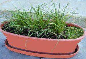 5 Herbs That Thrive Indoors Growing Herbs Indoors Herbs 640 x 480