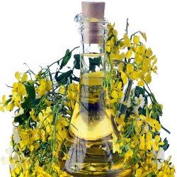 THE GROWING POPULARITY OF MUSTARD OIL FOR HAIR GROWTH