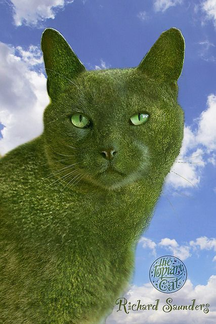 """See Richard Saunders topiary cat series on facebook- search """"The Topiary Cat"""""""