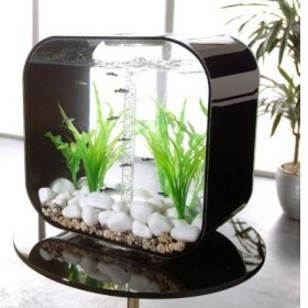 Modern aquarium decor