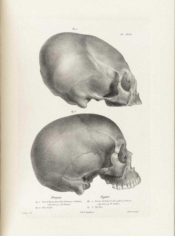 54 best • skull • images on Pinterest | Skull, Skulls and Skull art