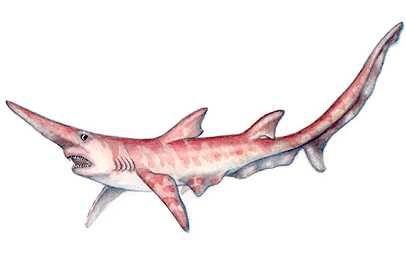 10 TERRIFYING EXTINCT SHARKS TOYS - Prehistoric Sharks ...