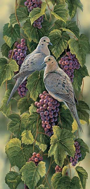 doves and grapes....Rosemary Millette ~