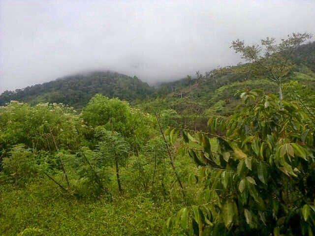 Gegarang Village Mountain forest