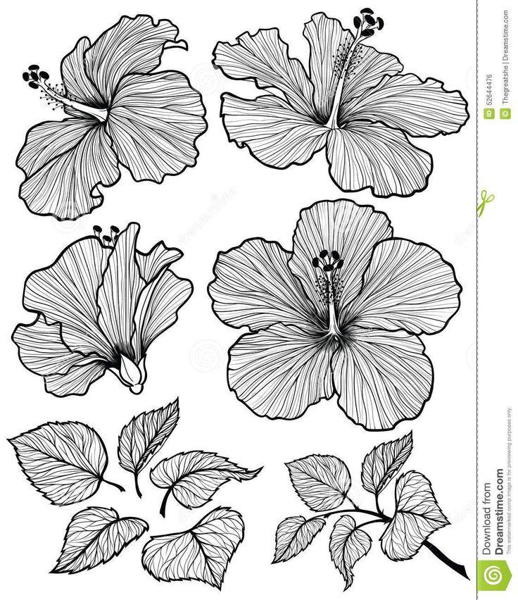 Grafischer Kopf der Hibiscusblume stellte mit Blättern und Niederlassung mit den Blättern ein, die auf weißem Hintergrund lokalisiert wurden. Vektorillustration, von Hand gezeichnet. #Hibiskus